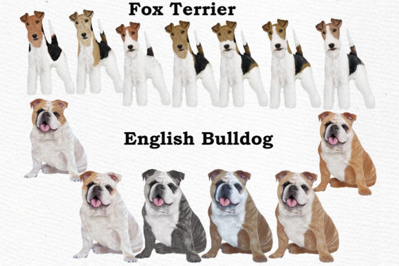 Dogs Clipart Dog Breeds Pet Clipart Graphic Illustrations By LeCoqDesign - Image 4