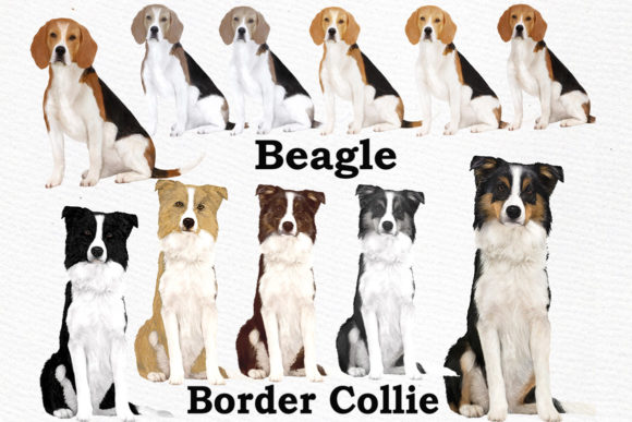 Dogs Clipart Dog Breeds Pet Clipart Graphic Illustrations By LeCoqDesign - Image 2