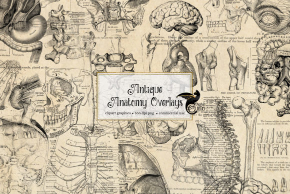 Print on Demand: Antique Anatomy Overlays Graphic Illustrations By Digital Curio - Image 1