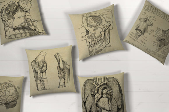 Print on Demand: Antique Anatomy Overlays Graphic Illustrations By Digital Curio - Image 3