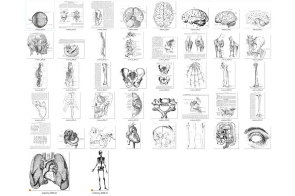 Print on Demand: Antique Anatomy Overlays Graphic Illustrations By Digital Curio - Image 4