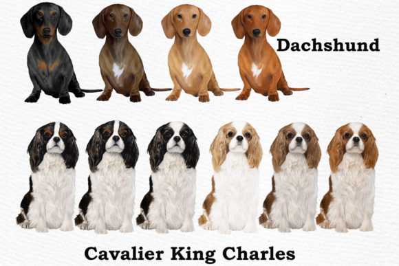 Dog Breeds Clipart Graphic Item