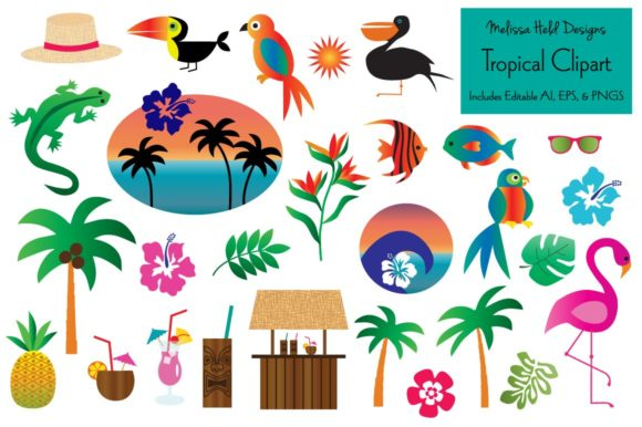Tropical Clipart Graphic Illustrations By Melissa Held Designs
