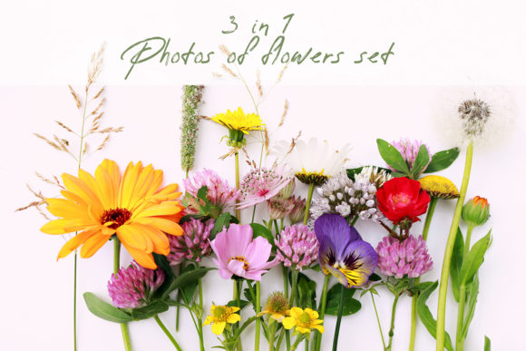 Set of Wild Flowers Photos Graphic Nature By fleurartmariia