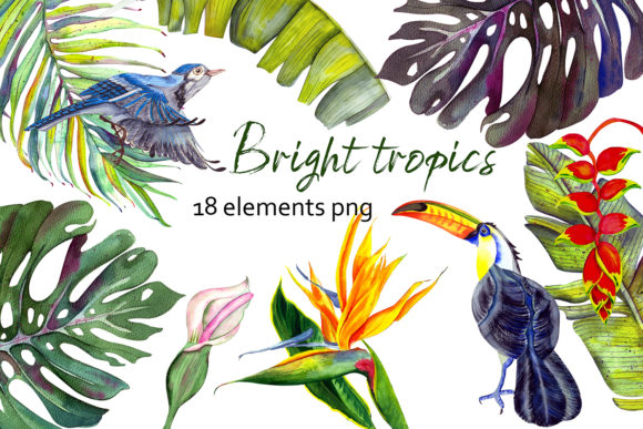 Bright Tropics Watercolor Graphic Illustrations By ElenaZlataArt
