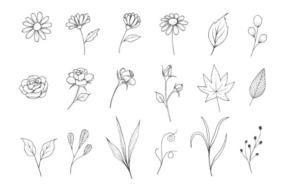 Flowers Sketch Collection with Line Art Graphic Illustrations By Aghadhia Studio