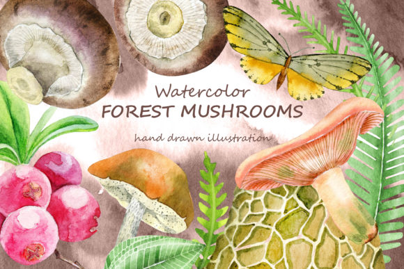 Forest Mushrooms Graphic Illustrations By dvdarina