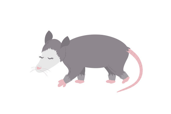 Download Free American Opossum Svg Cut File By Creative Fabrica Crafts for Cricut Explore, Silhouette and other cutting machines.