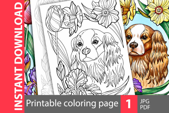 Cavalier King Charles. Coloring Page Graphic Coloring Pages & Books By NataliMyaStore