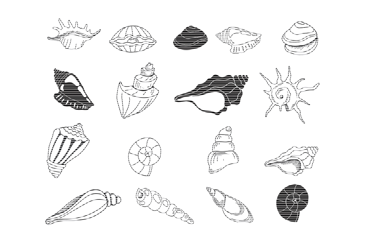 Download Free Hand Drawn Sea Shell Clip Art Graphic By Meshaarts Creative for Cricut Explore, Silhouette and other cutting machines.