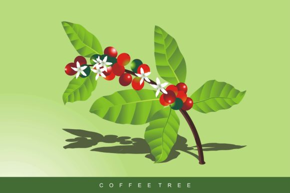 Download Free Coffee Tree Vector Illustration Graphic By Edywiyonopp for Cricut Explore, Silhouette and other cutting machines.