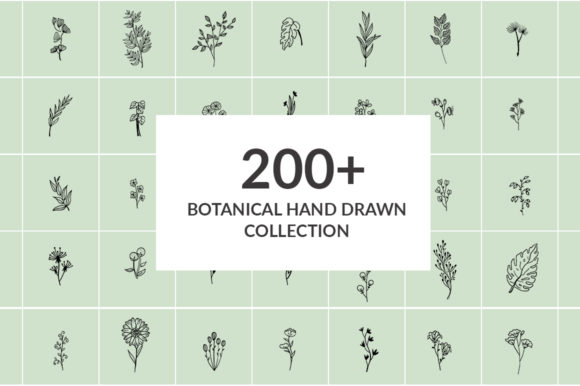 Print on Demand: 200+ Botanical Hand Drawn Collection Graphic Illustrations By Fillo Graphic