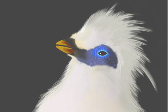 Print on Demand: Bird - 3 Graphic Illustrations By Etewut - Image 1
