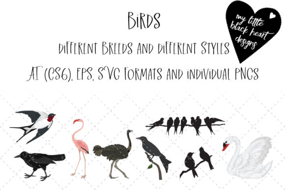 Birds (Different Types and Styles) Graphic Illustrations By My Little Black Heart