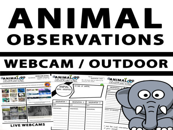 Webcam or Outdoor Animal Observation Graphic 3rd grade By Saving The Teachers