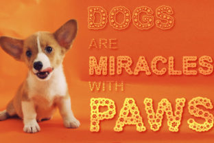Print on Demand: Dog Paws Decorative Font By Neat Publishing