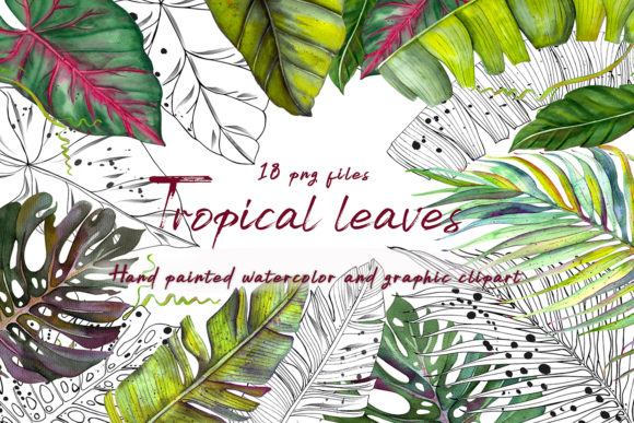 Tropics Watercolor and Graphic Clipart Graphic Illustrations By ElenaZlataArt