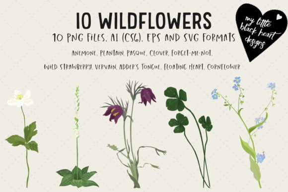 10 Wildflowers Graphic Illustrations By My Little Black Heart