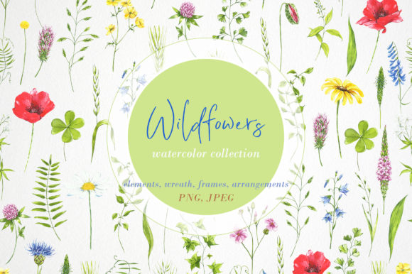 Print on Demand: Watercolor Clipart Wildflowers, Plants Graphic Illustrations By Angela Pylypenko