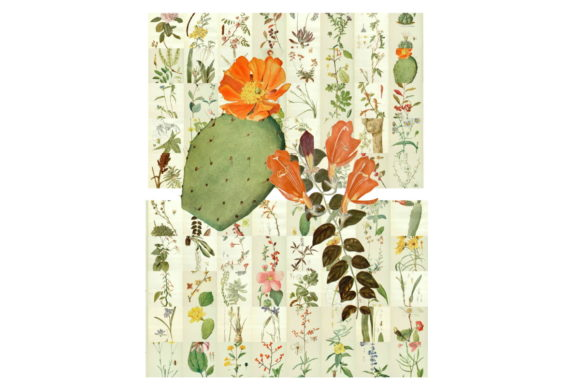 Download Free 2 Botanical Cactus Designs Graphics for Cricut Explore, Silhouette and other cutting machines.