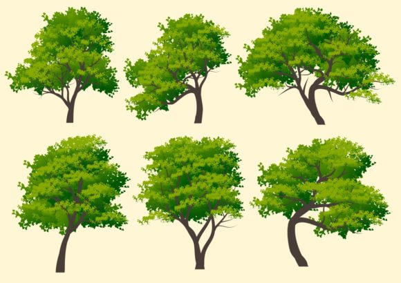 Set of Six Stylized Trees Graphic Illustrations By americodealmeida