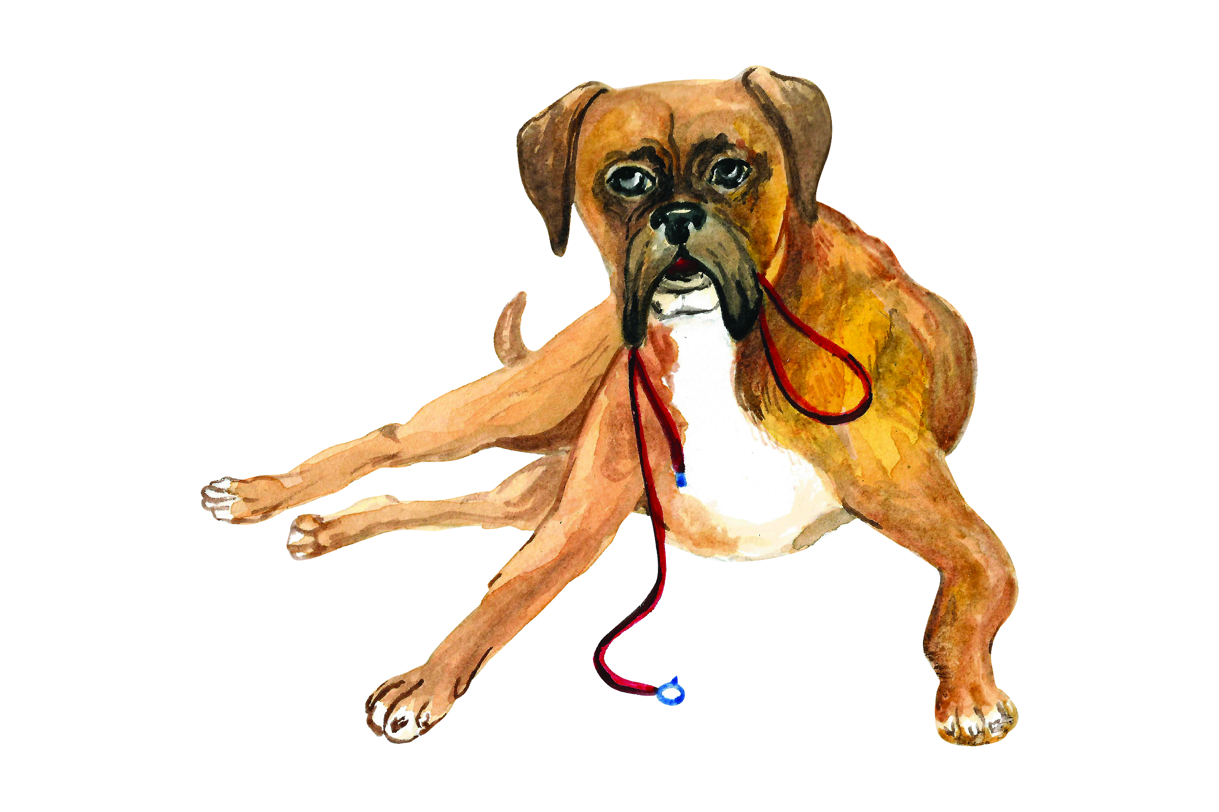 Download Free Boxer With With Leash In Mouth Svg Cut File By Creative Fabrica for Cricut Explore, Silhouette and other cutting machines.