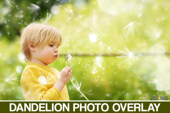50 Dandelion Flowers Photo Overlays Graphic Actions & Presets By 2SUNS