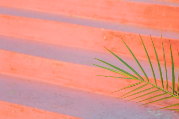Print on Demand: Pink Stairs and Tropical Tree Leaf Graphic Nature By lunarctic