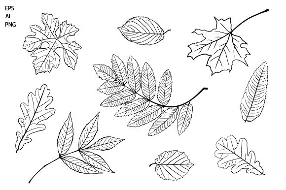 Print on Demand: Vector Set of Leaves Clipart Graphic Objects By EmbArt