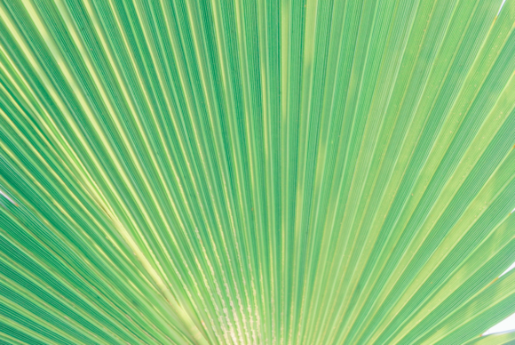 Print on Demand: Palm Tree Leaf Texture Close Up Graphic Nature By lunarctic