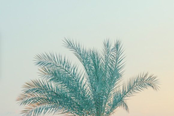 Print on Demand: Palm Tree Leaves Graphic Holidays By lunarctic