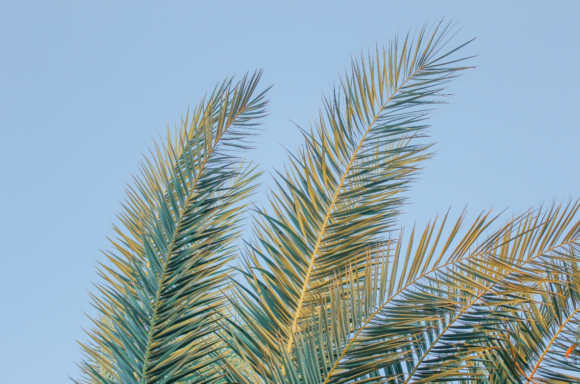 Palm Tree Leaves Graphic By Lunarctic Creative Fabrica