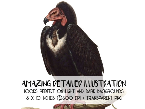 Download Free Black Vulture Image Otogyps Calvus Graphic By Antique Pixls for Cricut Explore, Silhouette and other cutting machines.