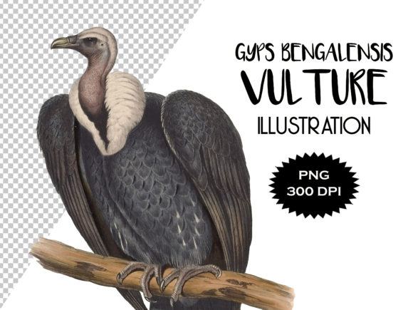 Download Free Indian White Backed Vulture Illustration Graphic By Antique for Cricut Explore, Silhouette and other cutting machines.