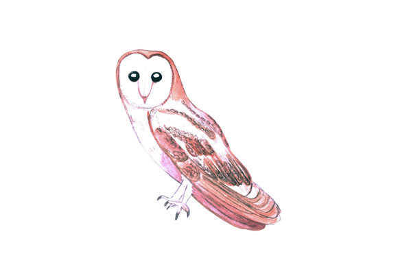 Download Free Barn Owl Bird Watercolor Graphic By Shawlin Creative Fabrica for Cricut Explore, Silhouette and other cutting machines.