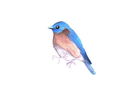Download Free Bluebird Watercolor Bird Graphic By Shawlin Creative Fabrica for Cricut Explore, Silhouette and other cutting machines.