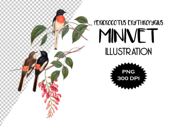 Download Free Cawnpore Pericrocotus Bird Illustration Graphic By Antique Pixls for Cricut Explore, Silhouette and other cutting machines.