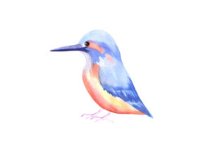 Kingfisher Bird Watercolor Graphic Illustrations By shawlin