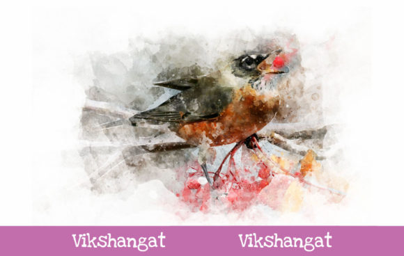 Print on Demand: American Robin Watercolor Art Graphic Illustrations By vikshangat