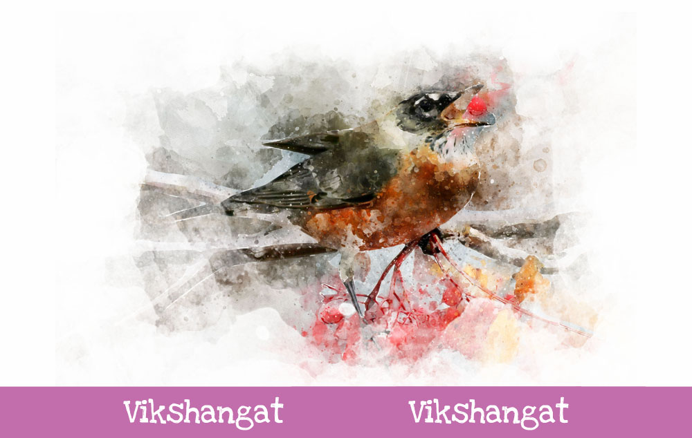 Download Free American Robin Watercolor Art Graphic By Vikshangat Creative for Cricut Explore, Silhouette and other cutting machines.