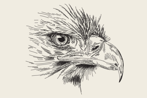 Print on Demand: Engraving Drawing Animal of Eagle Head Graphic Crafts By Rimbu Creative