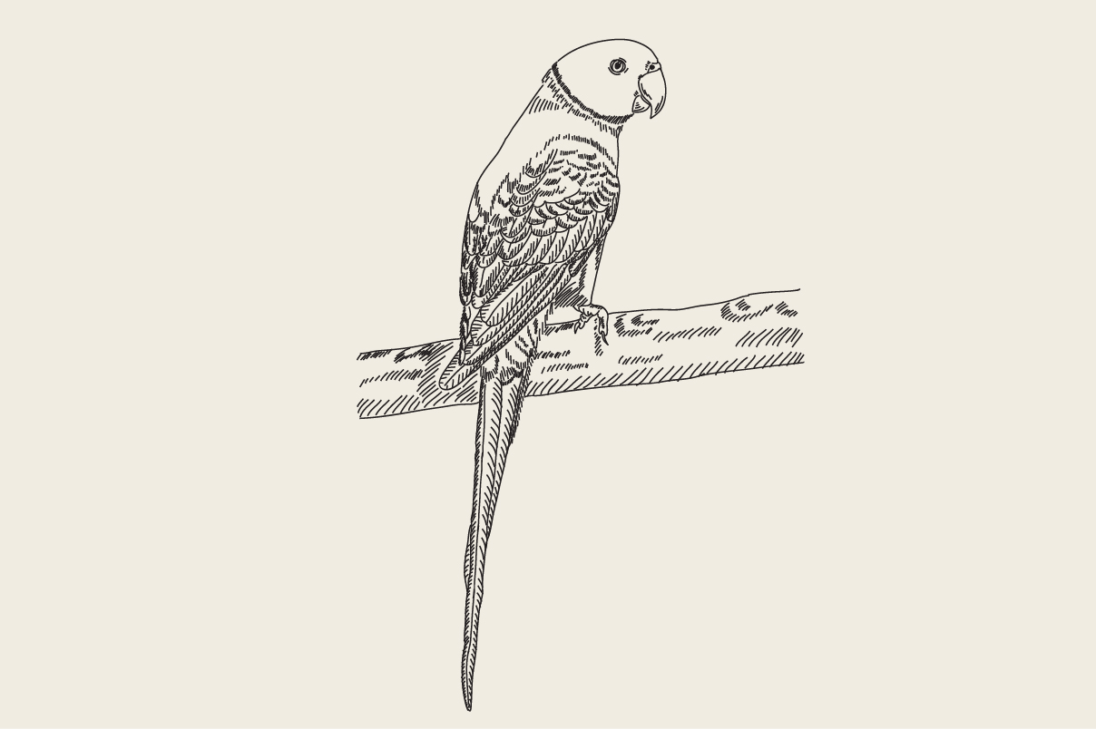 Download Free Engraving Drawing Animal Of Parrot Graphic By Rimbu Creative for Cricut Explore, Silhouette and other cutting machines.
