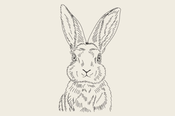 Download Free Engraving Drawing Animal Of Rabbit Graphic By Rimbu Creative for Cricut Explore, Silhouette and other cutting machines.