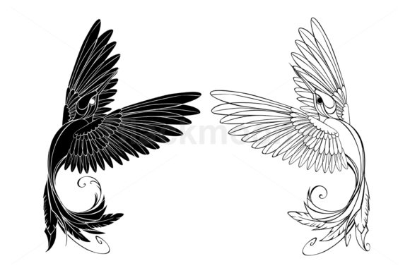 Monochrome Hummingbird Graphic Illustrations By Blackmoon9