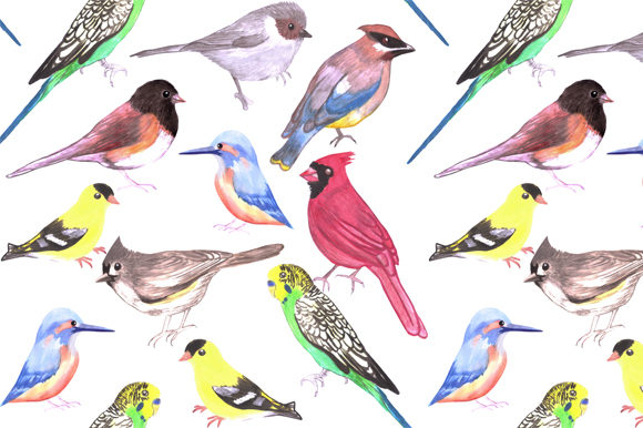 Wild and Pet Birds Graphic Backgrounds By shawlin