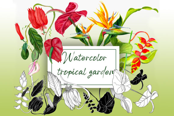 Watercolor Tropical Flowers Graphic Illustrations By ElenaZlataArt
