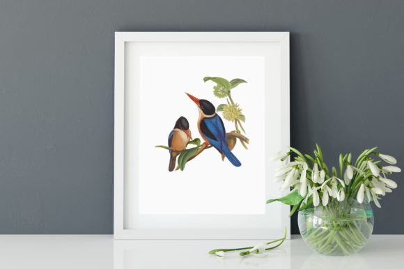 Download Free Black Capped Kingfisher Illustration Graphic By Antique Pixls for Cricut Explore, Silhouette and other cutting machines.