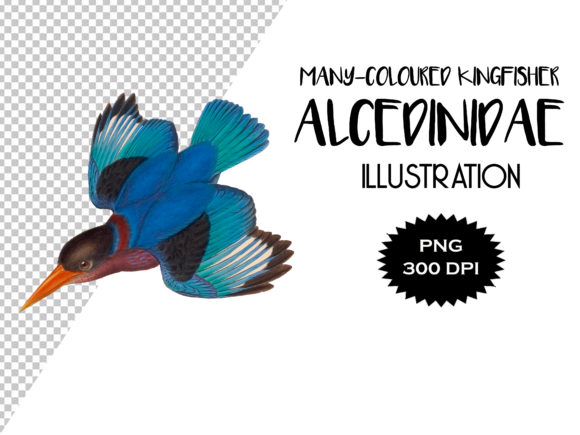 Download Free Multi Colored Kingfisher Image Graphic By Antique Pixls for Cricut Explore, Silhouette and other cutting machines.
