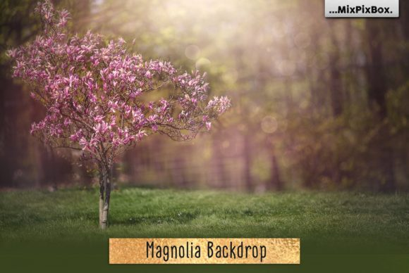 Print on Demand: Magnolia Backdrop Graphic Layer Styles By MixPixBox