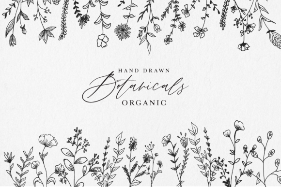Download Free Hand Drawn Botanical Illustrations Graphic By Silverdav for Cricut Explore, Silhouette and other cutting machines.